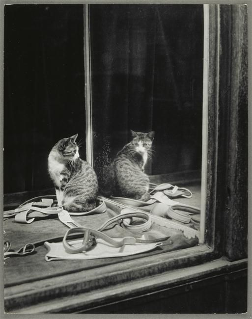 Brassaï (1899-1984) - Chat se regardant dans la glace [cat in a shop window] - [inconnu ] - Réunion des Musées Nationaux-Grand Palais
