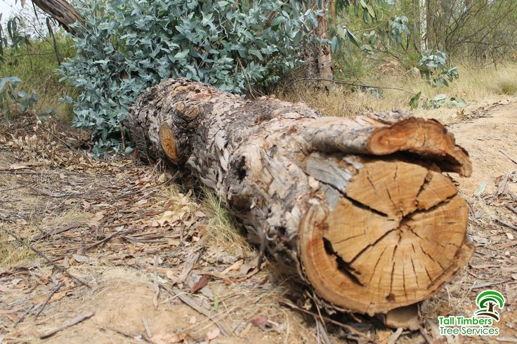Tree Removal Sydney is any process done to trees when problems are insolvable by just pruning and trimming. This is urgent to cases when the only feasible option is to remove parts of the trees or the whole tree instead.