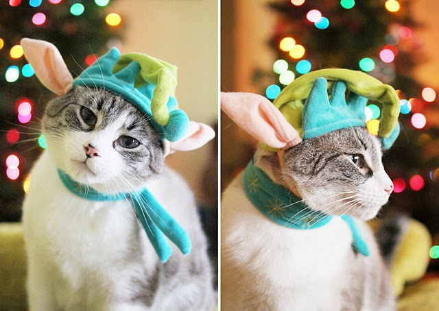 cute kitty :): Cats, Babushka Kitty, Elf Ears, Cutest Kitty, Cute Kitty, Crazy Cat, Cat Wear, Merry Christmas, Cat Lady