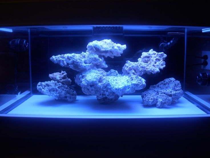 Minimalist Aquascaping - Page 59 - Reef Central Online ...