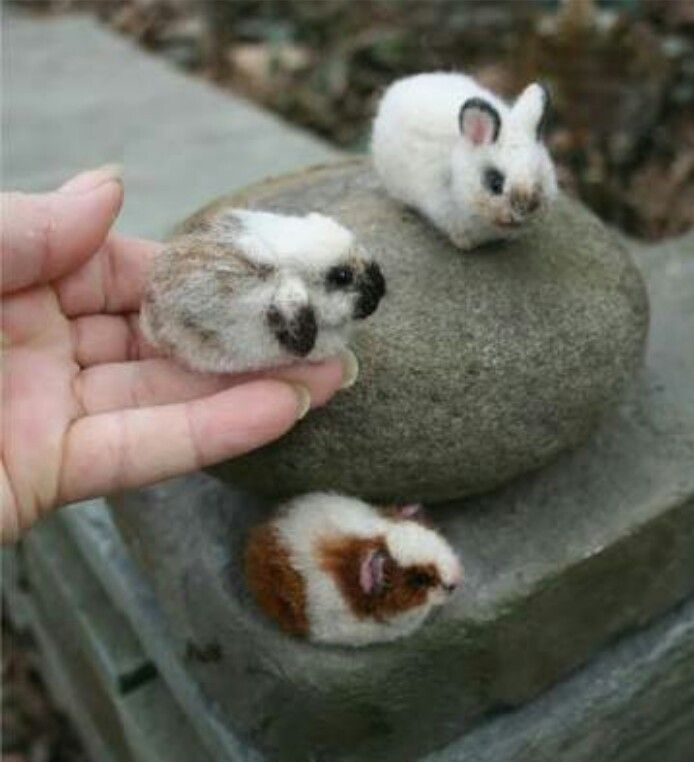 Look how small they are!!!