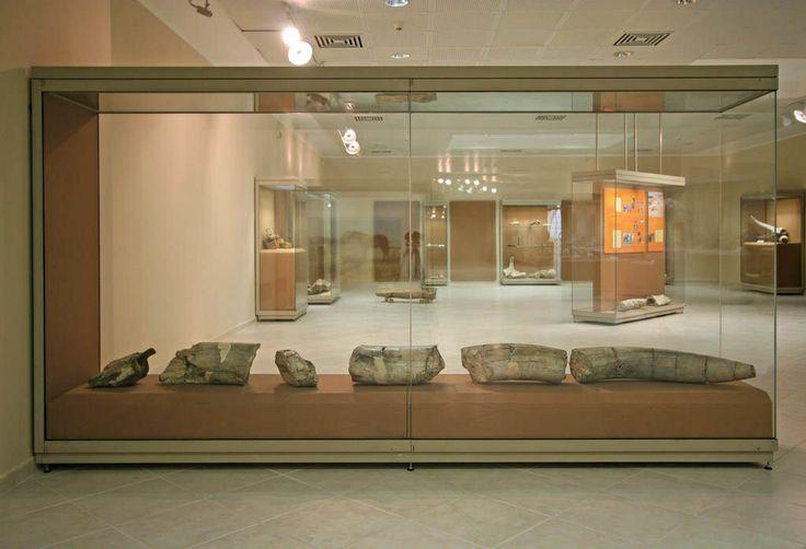 Παλαιοντολογικό Ιστορικό Μουσείο Πτολεμαΐδας  Palaiodological Museum Ptolemaida