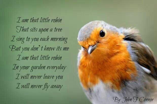 I am that little robin