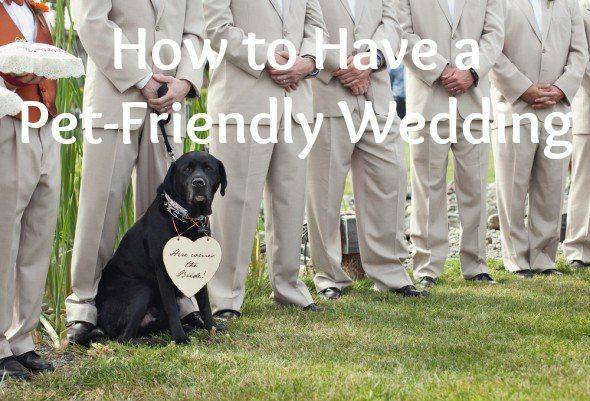 Before you buy that Labradoodle-sized tuxedo, allow us to offer some advice on how to throw a successful pet-friendly wedding.