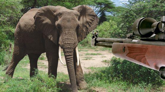 Bildmontage, bei der ein Jagdgewehr auf einen Afrikanischen Elefant zielt.