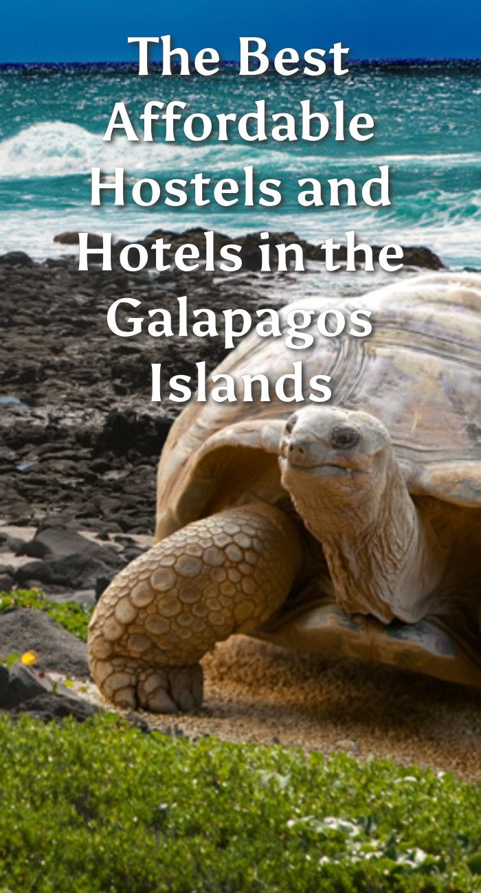The Best Affordable Hostels and Hotels in the Galapagos Islands: The Galapagos Islands are a small archipelago of islands belonging to…