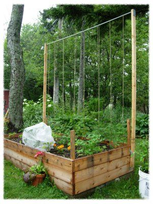 trellis tomatoes, how to grow a single tomoato in one square foot up a length of twine, ingenius!
