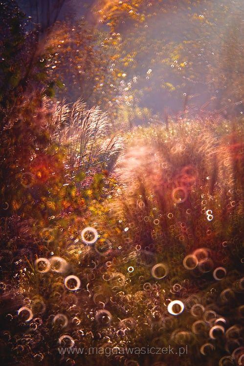 Morning glory by Magda Wasiczek on 500px