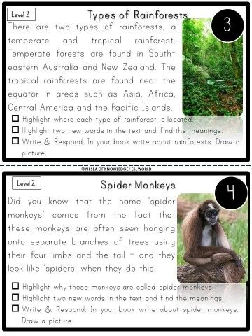 Rainforest Animals Reading Comprehension And Task Cards