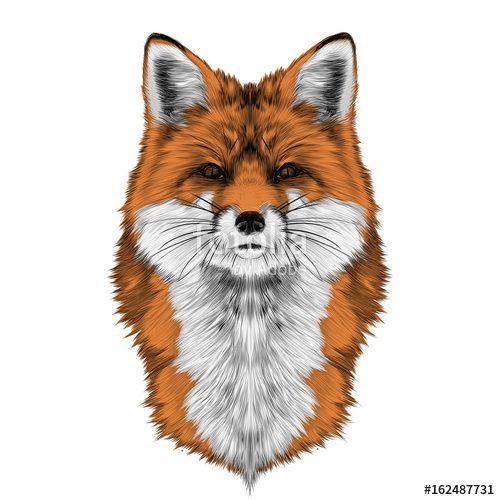 25+ Best Fox Head Ideas On Pinterest