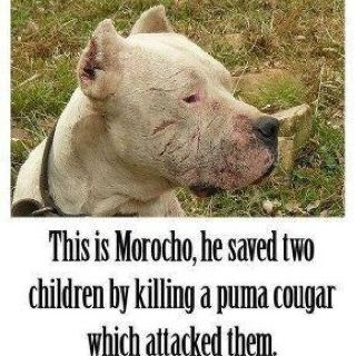 """Not ALL Pit Bulls are """"bad""""!"""