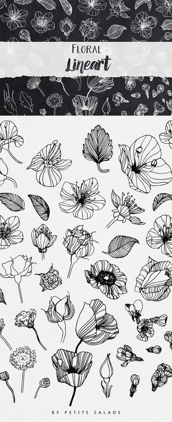 Over 50 Hand-drawn floral elements in PNG/EPS form…