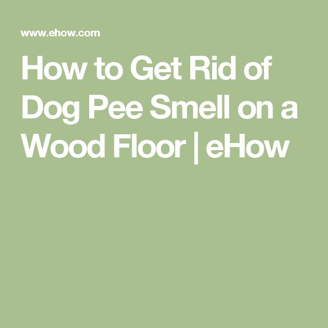 How to Get Rid of Dog Pee Smell on a Wood Floor   eHow