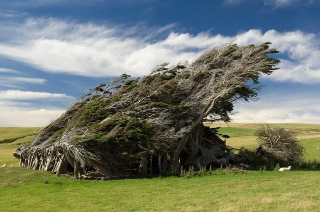 13 increíbles árboles rebeldes que tienes que ver - Batanga