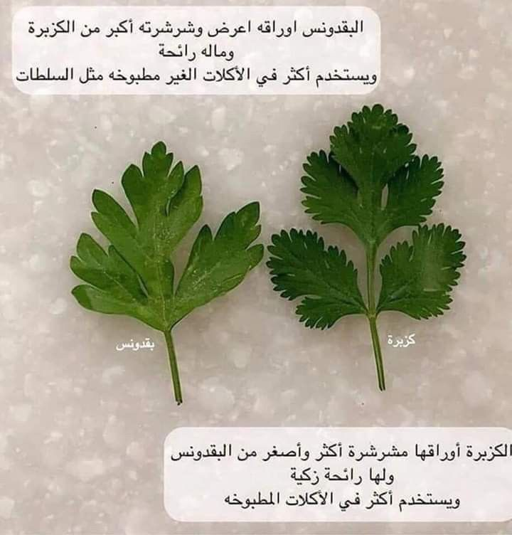 Pin By Enas Kharbotly On Cooking In 2020 Herbs Cooking Food