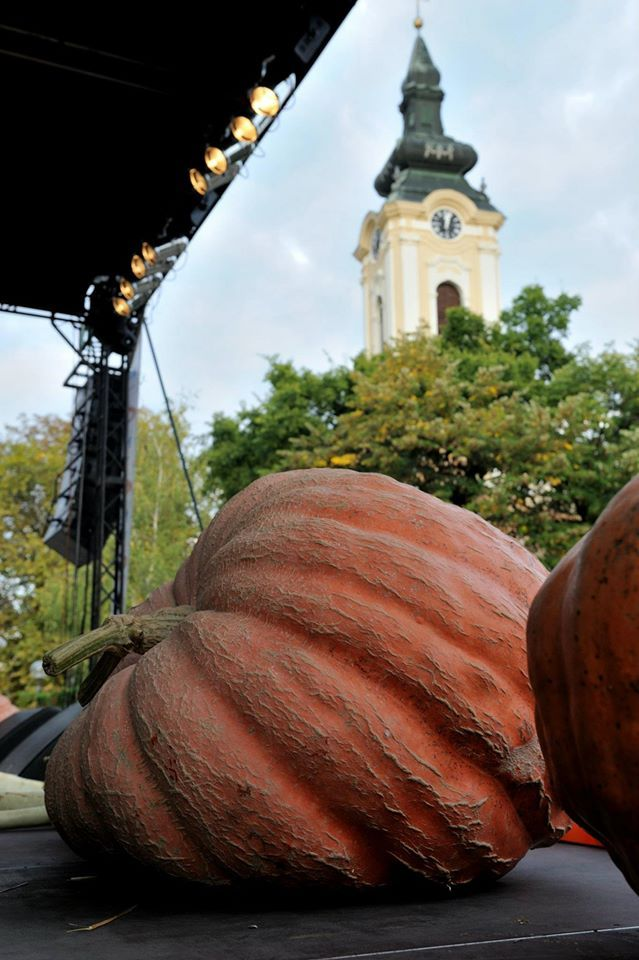 Photo: Sretenovic Pumpkin Days is an annual manifestation that takes place in the middle of October.  http://www.serbia.travel/destinations/52-amazing-weekends-in-serbia/kikinda-becej-novi-becej/