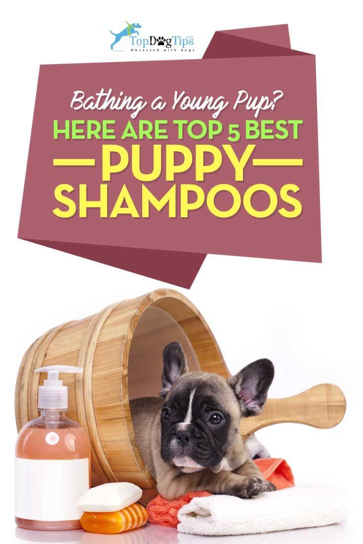 2016 Top 5 Best Puppy Shampoo for Safe Puppy Wash