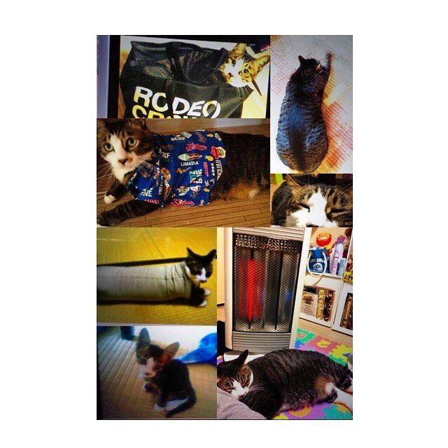 最近遺体処置してると泣きそうになる(°_°)我が家のアイドル後藤まさおに万が一何かあったらその時は沖縄を出て実家に帰ってつきっきりで看病するつもり。この仕事してるから余計に心配💉 #まさお #ペット #愛猫 #デブ猫 #動物 #看護師