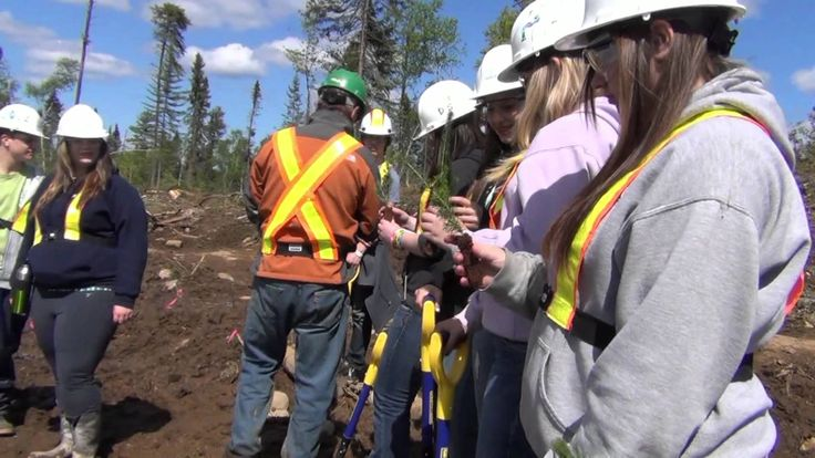 Students learn about the value of clear cutting in forests.