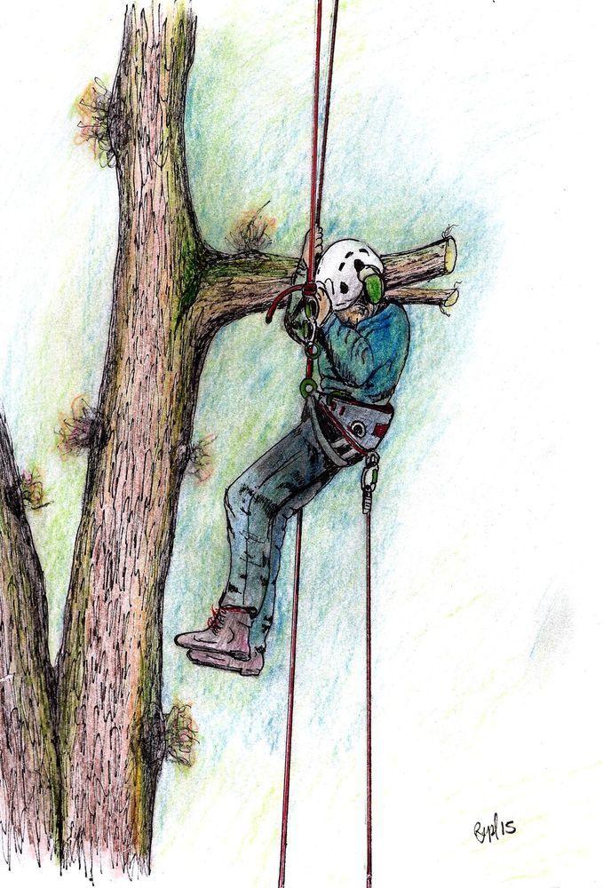 A4 Print Arborist Felling Stihl 020t Chainsaw Husqvarna