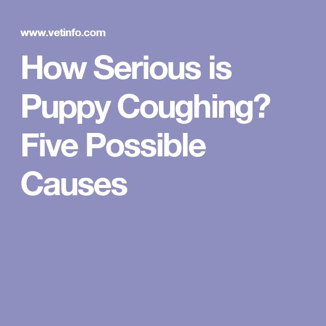 How Serious is Puppy Coughing? Five Possible Causes