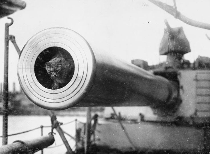Togo, the cat mascot of the battleship HMS Dreadnought. (Image, IWM - Q 22887)
