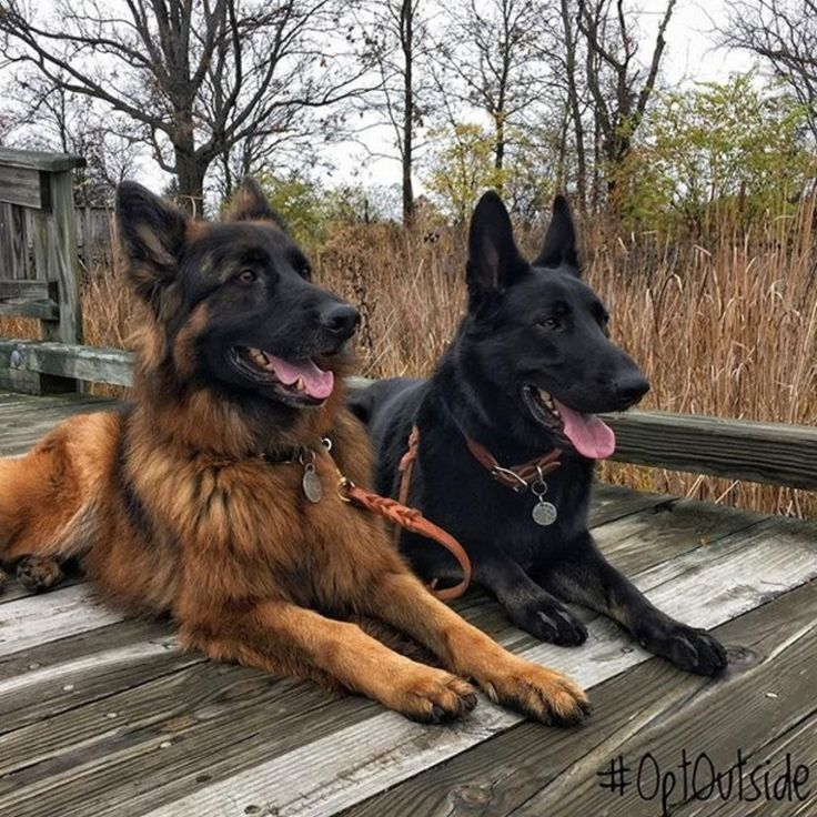 New in the life of Varick and Timber!