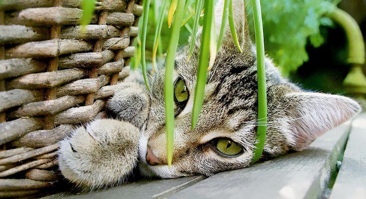 13 essbare Pflanzen für Katzen – Mandy Marcinek