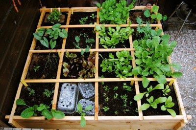Square foot (ormeter)gardening! | The Green Info, Inspiration and Action Blog