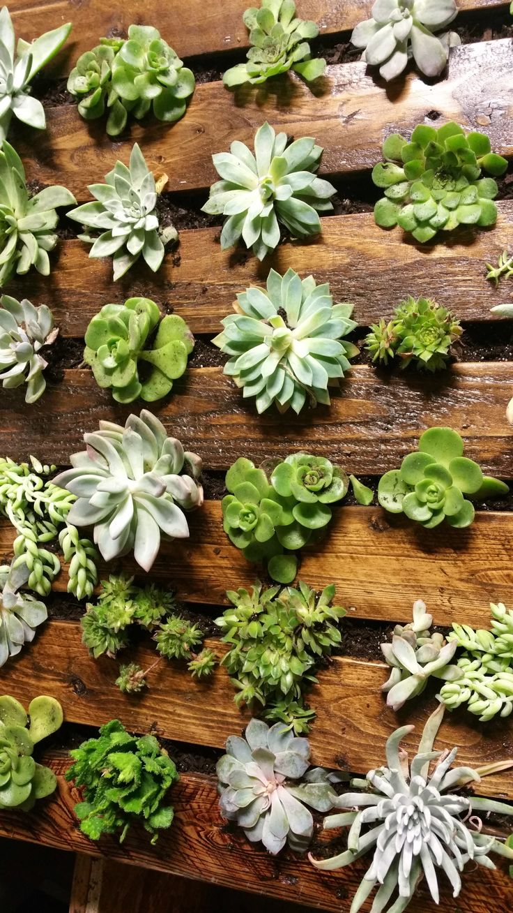 Vertical Garden Made With Repurposed Pallets and of course, Stunning Succulents making this Geranium Street's Stunning Succulent Shadowbox! Amazing!