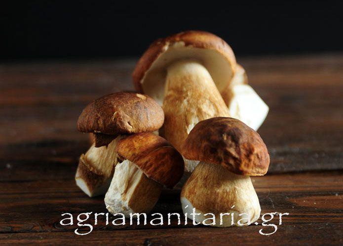 Συνταγές με μανιτάρια mushroom recipes