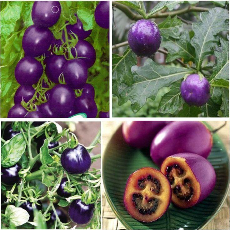 L gumes violets graines de mauve 100 bag tomate cerise - Plant de tomate cerise ...