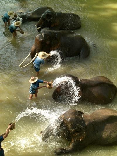 Time to bathe the elephants.