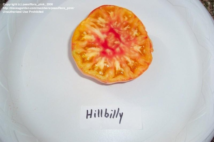Hillbilly - haven't had much success with this one but it sure is purdie!