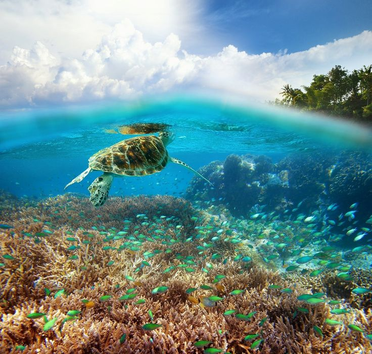 "landscapelifescape: ""Gili Meno Island, Indonesia by Soft Light """