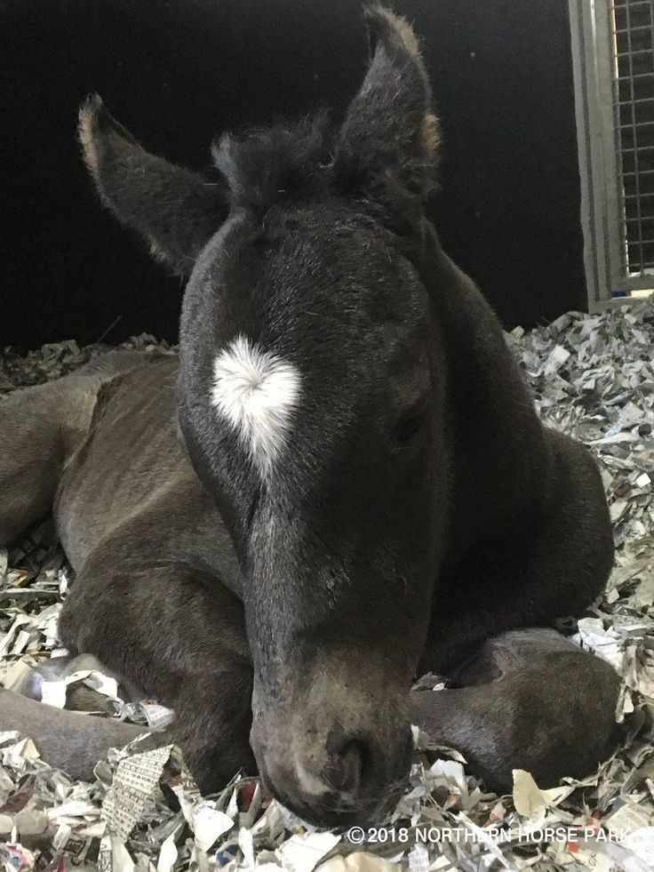 Admire Temba's [Kurofune-Admire Groove] 2018 Maurice filly (photo: Northern Horse Park)