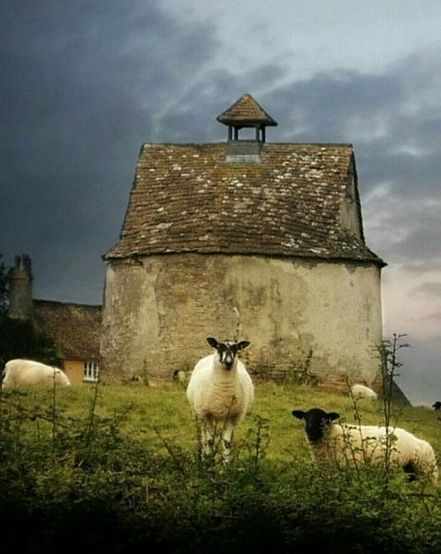 This just makes me want to move to Ireland, buy some land, and start a sheep farm. Think it'd be quite peaceful.