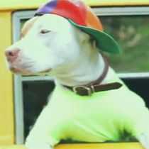WATCH: The Fresh Pup of Bel-Air