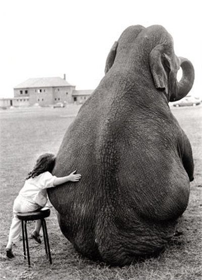 Friends come in all sizes • photo: jmdezines on Flickr...sweet child and beautiful elephant.