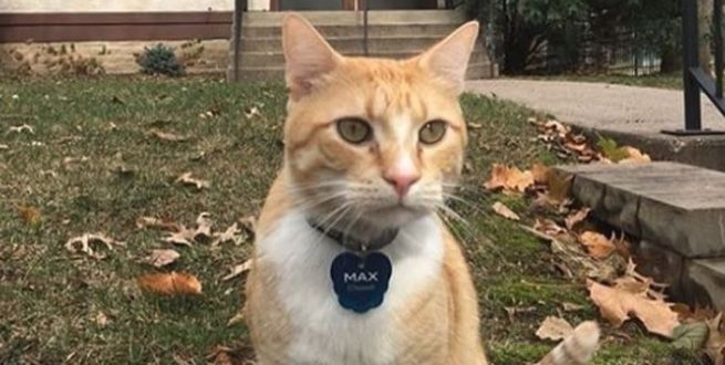 Max is a free\u002Droaming kitty in St. Paul who isn\u0027t allowed in the local college\u0027s library ... even if he\u0027s welcomed on the internet.