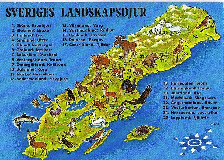 sveriges landskapsdjur - Sök på Google