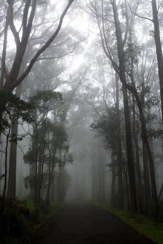 One Tree Hill, Australia