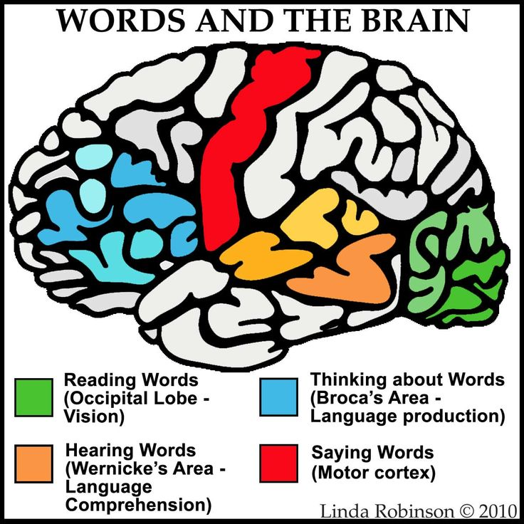 Linda Robinson: Our Words: See Hear Think Say Different parts of the brain are used when interacting with language.