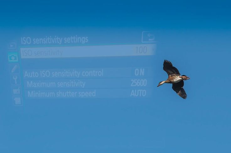 Try Auto ISO in Rapidly Changing Light