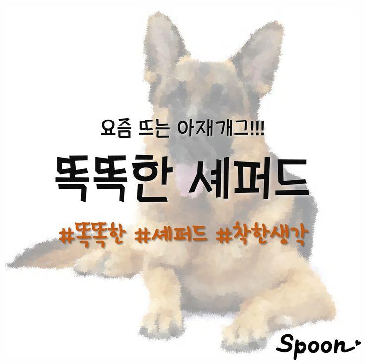 (아재개그)똑똑한 셰퍼드의 단점!? : 네이버 포스트 스푼  #아재개그 #아재 #유머 #셰퍼드 #강아지 #애완동물 #스푼