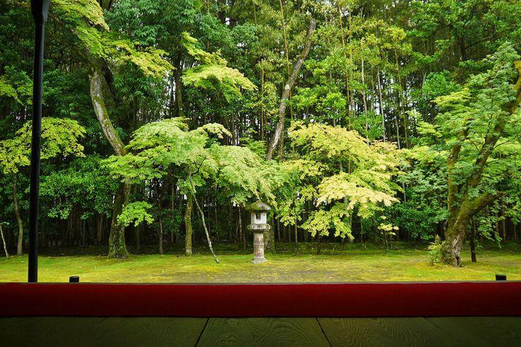 苔の参道があまりにも美しい。京都「高桐院」の幻想的な雰囲気に引き込まれそう - Find Travel