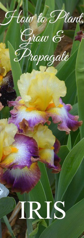 ecb8d8e0c35a3 13 best HIPPY FLOWER POWER STYLE WEDDING images on Pinterest ...