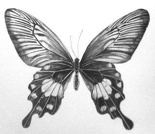 how to draw a realistic butterfly easy