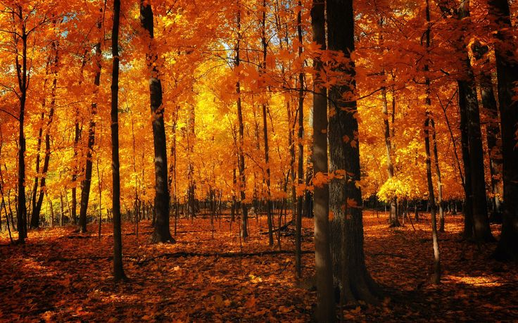 Summer had conceded to fall and so we walked into the autumnal inferno of that maple woodland, into the autumnal inferno of our lives…