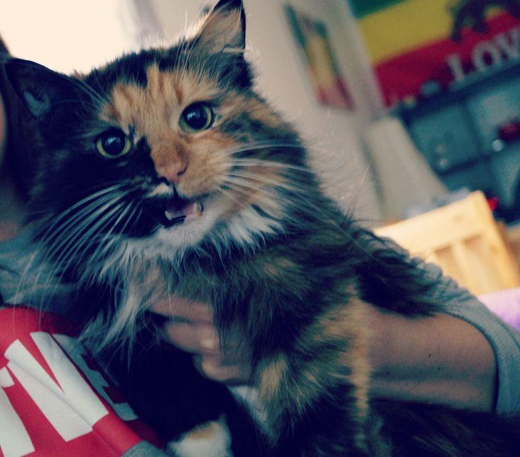 Missi,my cat ☺️